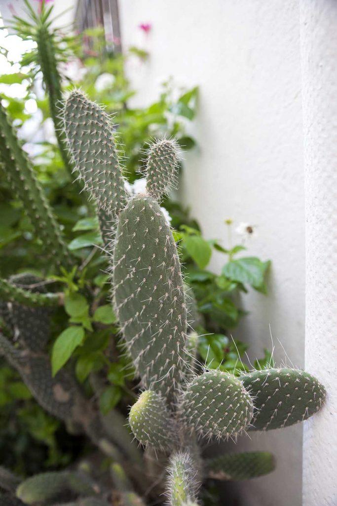 cadaques cactus pueblos bonitos costa brava increible pero cierzo