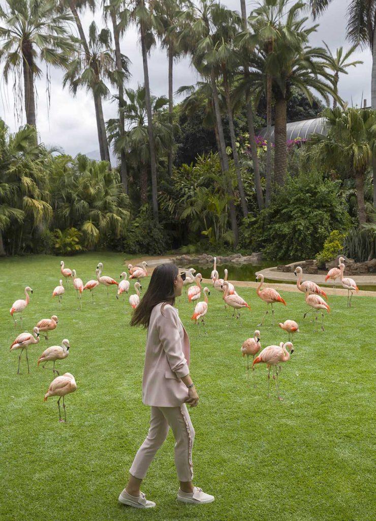 Flamencos y traje rosa en Loro Parque Tenerife en el blog increíble pero cierzo